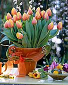 Tulipa 'Ad Rem' / Tulpen, Salix a. 'Tristis' / Kranz aus Weiden-