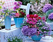 Blau-pinkes Frühlings-Arrangement