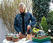 In Schalen ausgesäte Sommerblumenjungpflanzen müssen