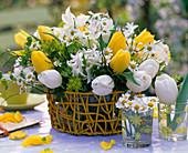 Tulipa / Tulpen gelb und weiß, Hyacinthus / Hyazinthen,