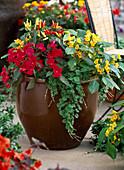 Impatiens auricoma 'Junglegold', I. Neu-Guinea 'Super Elfin Ruby'