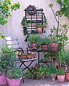 Salvia, rosemary