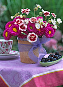 Erigeron 'Karminstrahl' / Feinstrahlenaster, Dianthus 'Alice'