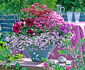 Lobelia 'Lavender' / Männertreu, Pelargonium 'Angeleyes' / Engelspelargonien