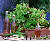 Salate in Terracottakästen, Allium / Lauchzwiebeln, Essig, Öl,