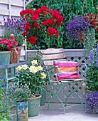 Rosa 'Ambiente', 'Heidefeuer' und chinensis / Rosen, Lavandula