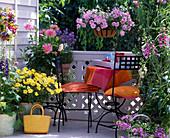 Argyranthemum 'Schöne von Nizza' / Margerite, Dahlia / Kaktus-