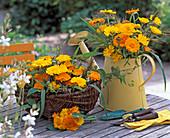 Calendula officinalis / Ringelblumen, Panicum / Hirse