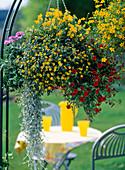 Ampel bepflanzen: 5/5 Sanvitalia / Husarenknöpfchen