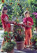 Mädchen ernten Lycopersicon / Tomaten