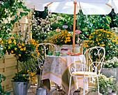 Balkon mit gelb blühenden Pflanzen