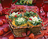 Brassica / Zierkohl, Rosa / Hagebutten, Sisal, Körbe als 4-er Quadrat, Physalis