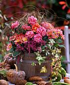 Rosa / Mini-Topfröschen, Chrysanthemum, Calluna / Heide, Carex testacea / Herbst