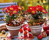Chrysanthemum, Rosa / Hagebutten, Clematis / Waldrebe, Malus / Äpfel, Acer / Aho