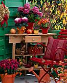 Chrysanthemum (verschiedene groß- und kleinblumige Chrysanthemen), Punica (Grana