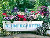 Fahrbarer Blumengarten mit Salvia farinacea / Mehlsalbei