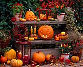 Halloween-Kürbis: 7/7. Cucurbita / Kürbisse, Capsicum / Zierpaprika, Hedera / Ef