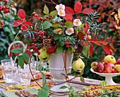 Rubus / Himbeeren, Brombeerranken, Amelanchier / Felsenbirne, Rosa / Hagebutten,