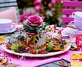 Brassica / Zierkohl, Rosa / Hagebutten, Calocephalus / Stacheldraht, Fagus / Buc