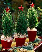 Kleine Wacholderbäumchen mit Weihnachtsschmuck