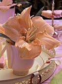Hippeastrum-Hybride (Amaryllis) lachsfarben