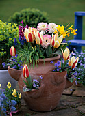 Taschenamphore (Erdbeertopf) mit Tulipa (Tulpen)