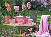 Hyacinthus 'Gipsy Queen' - Pink Pearl' - 'Apricot Passion'
