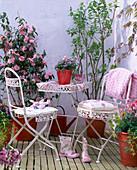 Camellia japonica (Kamelie), Syringa (Flieder)