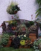 HERBSTZAUBER: Carex, BERGENIA, AJUGA REPTANS, FRAGARIA, HEDERA, AJUGA 'Burgundy