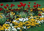 Tulipa 'APELDOORN', Viola, MYOSOTIS , ERYSIMUM