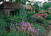 Rosa (Beetrosen, Strauchrosen, Kletterrosen), Campanula (Glockenblumen), Onopordum (Eselsdistel), Lychnis coronaria (Vexiernelke), alter Pferdestall