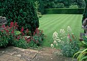 Blick von Treppe mit Centranthus ruber (Spornblumen) und Taxus (Eibe) auf streifig geschnittenen Rasen, Fläche begrenzt von Hecke