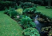 Teich mit Nymphaea (Seerosen), Iris pseudacorus 'Variegata' (Sumpfiris), am Ufer Epimedium (Elfenblumen), Hosta (Funkien), Primula (Primeln), hinten Rhododendron (Alpenrosen)