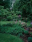 Beet mit Polygonum bistorta (Knöterich, Schlangenknoeterich), Geranium (Storchschnabel), Sedum (Fetthenne), Grabgabel, Giesskanne