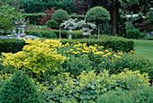 Acer shirasawanum 'Aureum' (Japanischer Gold-Ahorn), Alchemilla (Frauenmantel), Oenothera (Nachtkerze), Buxus (Buchs), Ligustrum (Liguster) Staemmchen , Hecke aus Taxus (Eibe)