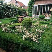 Rosengarten 'Filipes Kiftsgate', 'ALBERIC BARBIER'Eingefasst mit BUCHS - HECKEN , Blick auf Wintergarten