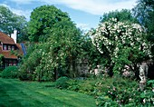 Landhausgarten im Frühsommer mit Rosa (Rosen) und Stauden, Putte auf Säule im Beet
