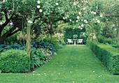 Laubengang aus Rosenboegen mit Rosa (Kletterrose) mit Blick auf kleinen Sitzplatz, Beet mit Hosta (Funkien) im Schatten unter Baum, Buxus (Buchs) als Hecke