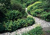Weg mit Naturstein gepflastert zwischen Beeten mit Alchemilla mollis (Frauenmantel) und Farnen