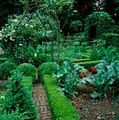 FORMALER Bauerngarten : Gemuesebeete mit Buxus (Buchs) Kegel, Kugeln, Hecken als Einfassung, Rosa (Rosen, Kletterrosen), Brokkoli (Brassica), Salate