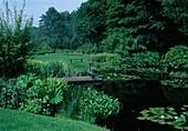 Peltiphyllum peltatum syn. Darmera peltata (Schildblatt) als Uferbepflanzung, Teich mit Holzsteg, Metall-Gänse als Deko, Nymphaea (Seerosen), Holzbank auf Rasenfläche