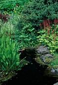Bachlauf mit Natursteinen, Alisma (Froschlöffel), Astilbe (Prachtspiere) am Ufer