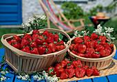 Frisch gepflueckte Erdbeeren (Fragaria) in Körbchen
