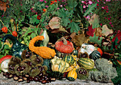 Kuerbisernte : Zierkürbisse, Speisekuerbisse (Cucurbita pepo), Maronen, Esskastanien (Castanea sativa), Herbstlaub
