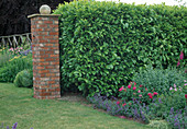 Hecke aus Prunus laurocerasus (Kirschlorbeer) trennt Gartenraeume, gemauerter Torpfosten mit Kugel, Beet mit Nepeta (Katzenminze) und Rosa (Rosen)