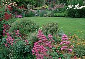 Blühende Staudenbeete und Rasen : Centranthus ruber (Spornblumen), Paeonia (Pfingstrosen), Rosa (Rosen) an Mauer