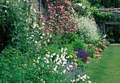 Staudenbeet mit Rosa (Kletterrose) an der Mauer, Campanula (Glockenblumen), Salvia nemorosa (Steppensalbei, Ziersalbei), Crambe cordifolia (Riesen-Schleierkraut) und Papaver orientalis (Orientalischer Mohn)