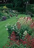Centranthus ruber 'Albus' 'Coccineus' (weiße und rote Spornblume), Blick auf buntes Staudenbeet und Rasen, Hecken als Abtrennung der Gartenraeume