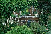 Holzbank unter Pergola mit Aristolochia macrophylla (Pfeifenwinde, Osterluzei), Beet mit Campanula (Glockenblumen), Hosta (Funkien) und Rosa (Rosen), Blick auf Terrasse mit Sitzgruppe