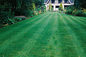 Rasenfläche in Streifen gemäht